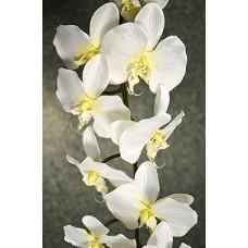 Орхидея Фаленопсис одиночная кремовая (силикон,) h-124см  арт.16-0014