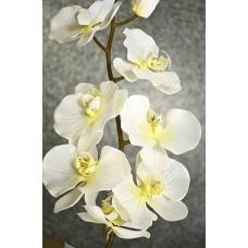 Орхидея Фаленопсис одиночная кремовая (силикон,) h-102см  арт.16-0078